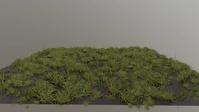 Grass growing test 02