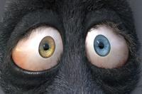 Franck's eyes: cornea shape