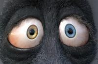 Franck's eyes: the irises