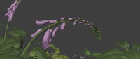 09_015_A - Blooming animation