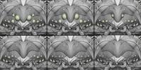 Alpha WIP 03 - Face variations