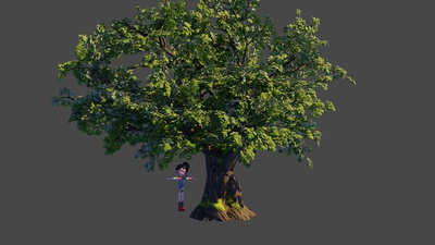 Oak tree 1: First stage