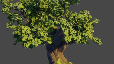 Oak tree 3: Trunk model and basic branches