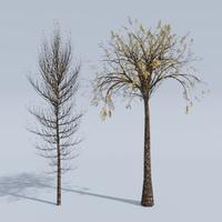 Animated Trees.mp4