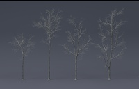 Tree Model and Material update 01