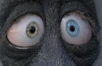 Franck's eyes: shading