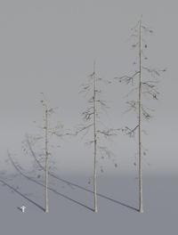 Tree Model Arrangements Tests 03