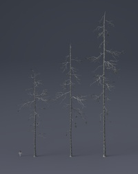 Tree Model and Material update 03