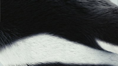 feathers01.png