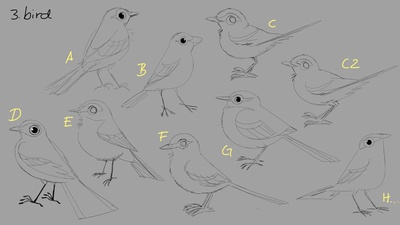 Western Yellow Wagtail concepts