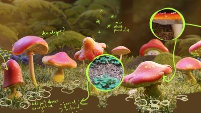 02__fungi_03notes.png