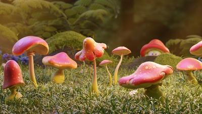 02__fungi_03.png