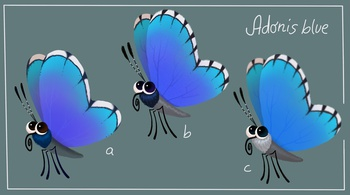 Adonisblue Butterfly design